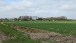 Overzichtsfoto Westerzanden met op de voorgrond de koeien van de familie Van Tilburg