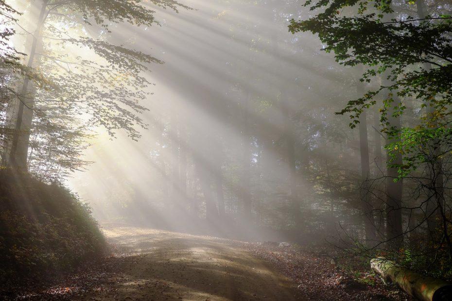 Zonnestralen over een zandweg in een bos